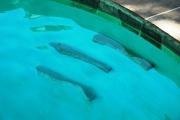 <h5>Custom Pool Spa - Argyle</h5><p>Signature Pools & Spas - Custom Swimming Pools</p>