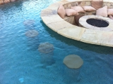 <h5>Outdoor Living - Island Park</h5><p>Signature Pools & Spas - Custom Swimming Pools</p>