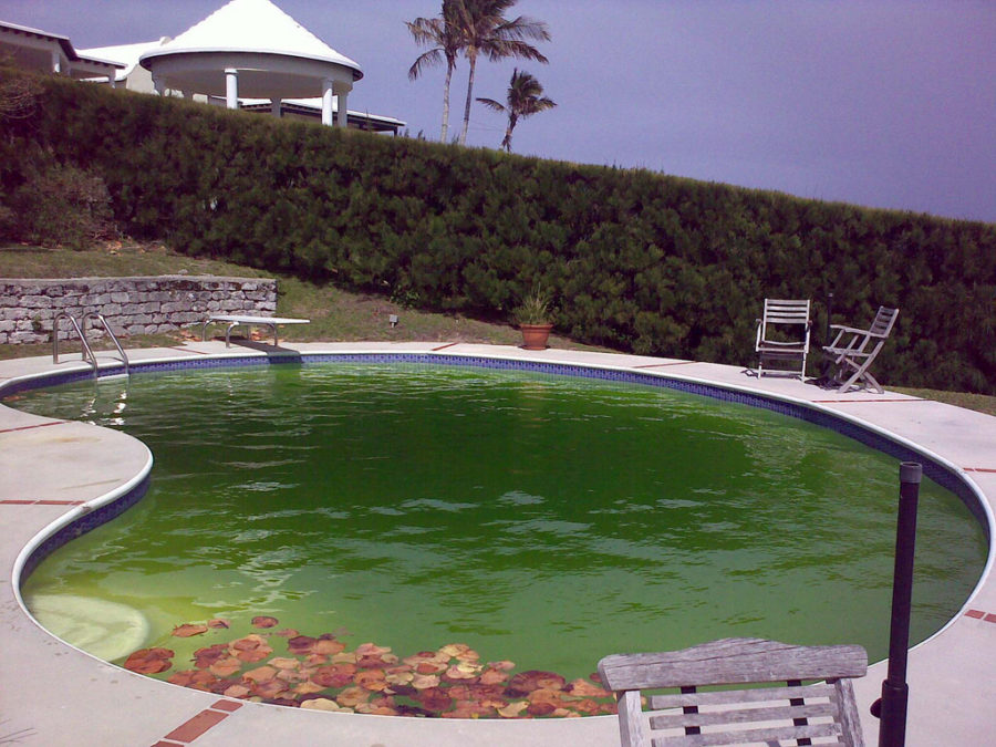 How to get rid of algae in your pool outdoor signature pools for Using algaecide in swimming pool